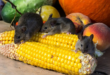 New Mexico Department of Health Reports Second Hantavirus Death of 2017