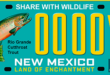 Cutthroat trout featured on new license plate