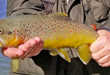 New Mexico Fishing and Stocking Report