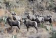 Deer, elk and bighorn enhancement raffle tickets are now available